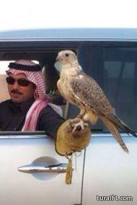 بيع طير بطريف للأمير محمد بن تركي بـ 100 الف ريال ( صور )