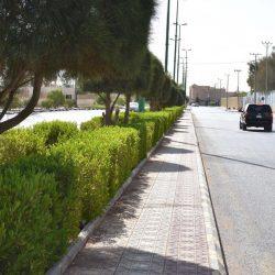 بالفيديو والصور..بلدية طريف تزين أسوار عدد من الشوارع برسومات ثلاثية الأبعاد