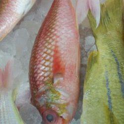 شاهد بالصور افتتاح محل الجبيل للأسماك الطازجة بطريف