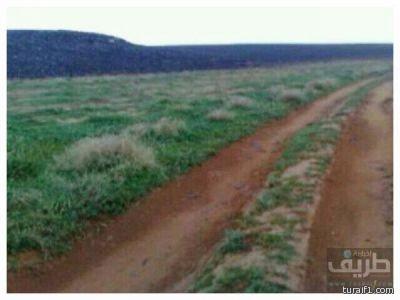 صور من ربيع حرة الحرة شرق طريف يوم الجمعة الموافق 27 / 3 / 1434هـ