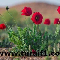 بلدية محافظة طريف تشارك بالحدث السنوي العالمي ساعة الأرض