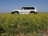 إخبارية طريف ترصد لكم بالصور ربيع حرة الحرة منطقة ( عروس )