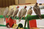 بالصور..تنظيم مزاد لبيع الصقور بمهرجان الصقور بطريف