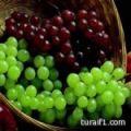 باحثون : فاكهة العنب .. للحماية من أشعة الشمس