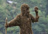 مقتل شاب بعد تعرضه للسعات أكثر من ألف نحلة في متنزه بأريزونا