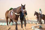 بالصور .. نتائج سباق الخيل على كأس بلدية محافظة طريف