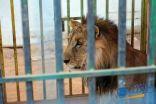 بالصور .. حديقة الحيوانات تجذب الزوار في مهرجان ريف طريف