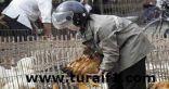 وفاة خامسة بمرض انفلونزا الخنازير في المملكة الأردنية